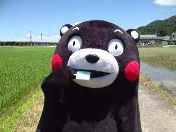 小森生活熊本熊任务在哪 熊本熊位置一览[多图]图片2